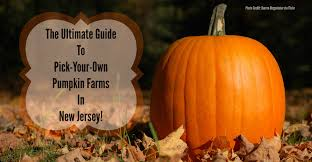 Pumpkin Picking Nj Colts Neck by 17 Migliori Idee Su Pumpkin Picking Nj Su Pinterest Decorazioni