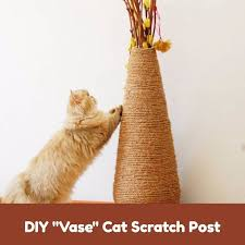 hide litter boxes in home professional pet sitting cat care