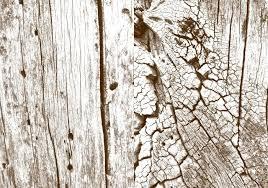 high definition pine wood grain texture free photoshop textures