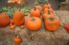 Pumpkin Fest Half Moon Bay by Half Moon Bay Art And Pumpkin Festival Pacific Victorian Bed And