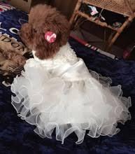 cat wedding dress get cheap puppy wedding dress aliexpress alibaba