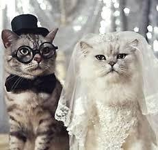 cat wedding dress best 25 cat wedding ideas on cake weddings with