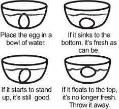 best 25 if eggs float ideas on pinterest do bad eggs float bad