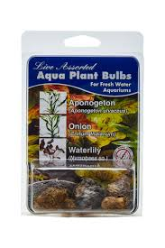 aquarium plant bulbs give your customers the best