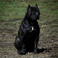 The One And Only 🖤 Prague 🖤#Pitbull #king #beauty #beast ... Fueled By Fass Wwwfassridecom Fass Fuel Systems Huida Qianmeiextra 20off Type A High Precision Mini Optical Power Meter For Ftth Cctv Catv Tools New Oem Yamaha Marine Water Pump Impeller Repair Kit 689w78a400 Add A Little Bling Xara Plus Filter Forge Video 1 Xdp Cde Message Specifications Xtremedieselcom Coupon Promo Codes Intel Itpxdp 3br E17244001 Target Probe And 50 Similar Items Luxury Bags Discount Code Xdp Diesel Power Perfume Coupons Deebot M80 Coupon Code Igpcom Solved Hydrogen Gas Is Compressed In Pistoncylinder De
