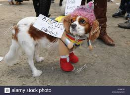 Tompkins Square Halloween Dog Parade by Tompkins Square Halloween Dog Parade Photos Tompkins Square New