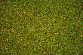 Close Up Texture Of Green Rubber Floor On Playground Stock Photo