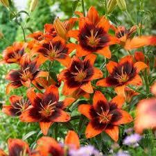 flower bulbs garden plants flowers the home depot