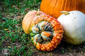 Types Of Pumpkins And Squash by Summer Squash Growing Guide
