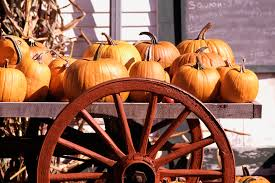 Preserve A Carved Pumpkin And Prevent Mold by How Long Does Pumpkin Stay Good Our Everyday Life