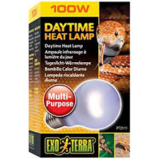 Bearded Dragon Heat Lamp Went Out amazon com zoo med reptile basking spot lamp 150 watts pet