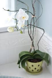 Best Bathroom Pot Plants by 11 Perfect Plants For Your Condo Bathroom