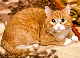 orange cat names are you a when it comes to cats 8 stereotypes based on
