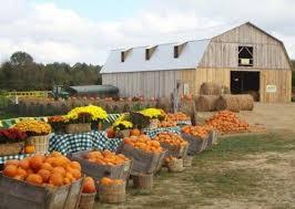 Pumpkin Patch Playground Chattanooga Tn by Keller U0027s Corny Country Pumpkin Patch U0026 Corn Maze Tennessee
