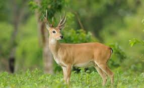 Deer Animals Images Backgrounds Hd Photos Gallery