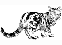 Black And White Realistic Cat Coloring Pages