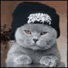 thug cat the popular thug cat gifs everyone s