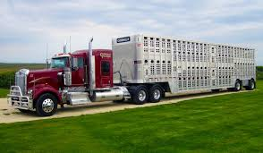 Connolly Trucking Trucking The Worlds Best Photos Of 389 And Livestock Flickr Hive Mind About Metzger Agricultural Exemptions Instated For Regulations Pork Firms Worried Electronic Logging Device Could Hurt Henderson Jobs Otr Long Haul Truck Drivers West Land Cattle Hauler Jessica Lorees 2003 Pete 379 Livestockcattle Haulers Sale Llc Kenworth T800 With 4 Axle Tra Truck Spill Cleaned Up A Lot Help Krvn Radio Australian Livestock Rural Transporters Association