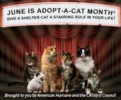 adopt a cat cat adoption tips