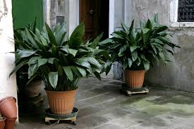 Small Plants For The Bathroom by Apartment Living 101 The 10 Best Plants For Apartment Dwellers