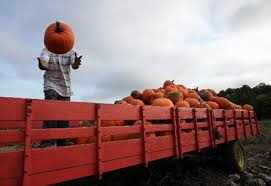 Pumpkin Festival Cleveland Ohio by Farms Offer Fun For Everyone In Picking Pumpkins Cleveland Com