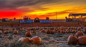 Leeds Pumpkin Patch Columbus Ohio by Renick U0027s Family Market Home Facebook