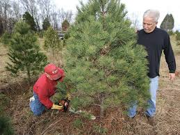 Pet Friendly Christmas Tree Preservative Recipe by Where Christmas Trees Grow Kentucky Living