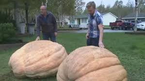 Heaviest Pumpkin Ever by Father Son Duo Competing To Become Cape Breton U0027s Top Gourd Growers