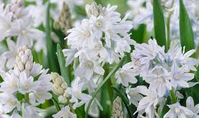 the best fall planted bulbs for areas the high country