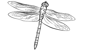 Simple Dragonfly Coloring Page 9