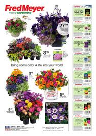 Fred Meyer Christmas Trees by Fred Meyer Garden Center Ad April 16 22 2017 Http Www