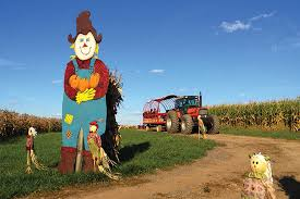 Pumpkin Patch Pittsburgh Pa 2015 by Best Of The Burgh Pumpkin Patches In The Pittsburgh Area The