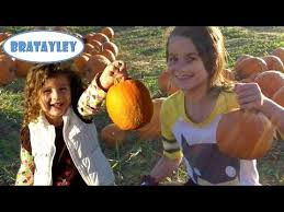 Sarasota Pumpkin Festival Location by Best Pumpkin Patches And Corn Mazes Near Tampa St Pete And