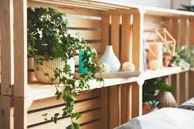 luftreinigende pflanzen die top 10 plantura