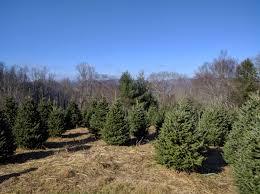 Fraser Fir Christmas Trees Nc by Where Do Christmas Trees Come From Hernando Sun