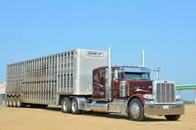 Trucking | Bullwagons | Pinterest | Livestock On The Road In South Dakota Pt 6 Home West Land Livestock Inc Trucking Haulers Pinterest Sale Llc Kenworth T800 With 4 Axle Bullwagon Tr Flickr What Are We Gonna Do With Them Hauling Industry Hams T908 Transports Mean Looking Marbert Transport Freight Ontario American Truck Simulator Peterbilt 389 Youtube Steve Yohn Livestock Trucking Horse Sales Agricultural Service Livestockcattle Gallery Transportation Is Important Part Of Cattle Through