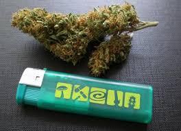recolte cannabis exterieur date la culture du cannabis en extérieur encyclopédie azarius