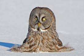 11 Fun Facts About Owls