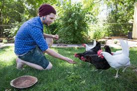 Backyard Chicken Coop Has Annoyed Neighbors Clucking | Omaha Metro ... Cheap How To Raise Chickens Find Deals On Heritage Chicken Breeds For Your Backyard With 1000 Images About Buy Guide Beginners Easy Steps Starting Egg Production Homestead Advisor 7 Reasons You Should Raising 101 In In Magnolia Market Chip Joanna Gaines 1251 Best Images Pinterest The Chick Veterinary Care For A Big Ed Barnham Limited Free Range 12 Tips To Balance Freedom Safety