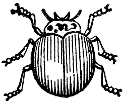 Image Of Grouchy Ladybug Coloring Page
