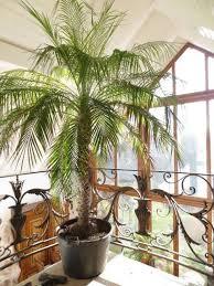 palme wohnzimmer wohnzimmer palmefürdaswohnzimmer