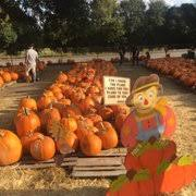 Pumpkin Patch San Jose 2015 by Bracken Pumpkin Patch Temp Closed 12 Photos Pumpkin Patches
