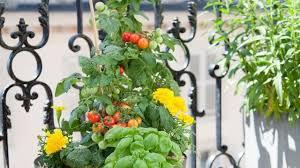 cultiver un potager un potager au carré sur le balcon conseil