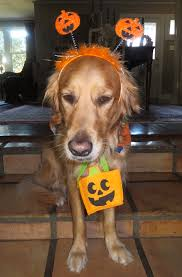 Best Pumpkin Patch In Baton Rouge by The Pumpkin Patch I Think I Was Tricked Thek9harperlee