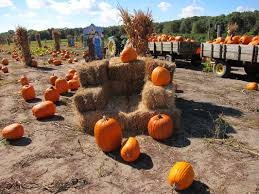 Pumpkin Picking Nj by Pick Your Own Giamarese Farm U0026 Orchards