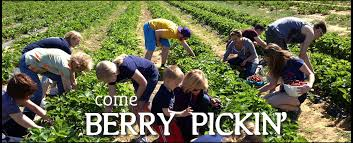 Pumpkin Picking Places In South Jersey by Vonthun Farms U Pick Farm With Apple Pumpkin U0026 Strawberry