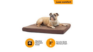 BarkBox Orthopedic Ultra Plush Pressure-Relief Memory Foam ... Bark Box Coupons Arc Village Thrift Store Barkbox Ebarkshop Groupon 2014 Related Keywords Suggestions The Newly Leaked Secrets To Coupon Uncovered Barkbox That Touch Of Pit Shop Big Dees Tack Coupon Codes Coupons Mma Warehouse Barkbox Promo Codes Podcast 1 Online Sales For November 2019 Supersized 90s Throwback Electronic Dog Toy Bundle Cyber Monday Deal First Box For 5 Msa