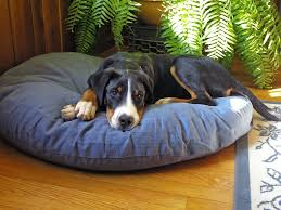 Coolaroo Dog Bed Large exterior coolaroo dog bed design for comfortable animal bed style