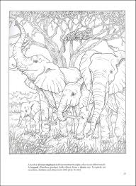 African Plains Coloring Book