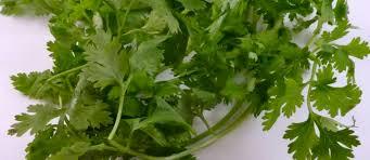 cuisine coriandre recettes de coriandre et de cuisine indienne